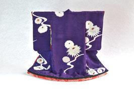 掛こべべ「白牡丹菊 本紫」