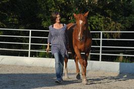Einzelstunden Freiarbeit mit Pferden