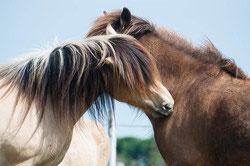 Hero's Journey mit Pferden über glückliche Beziehungen
