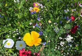 """Besitzurkunde über 3 Quadratmeter wertvolles Bienenschutzgebiet im geschützten Biosphärenreservat """"Bienenblütenfeld"""" für die Laufzeit von 12 Monaten. (Sofortiger Download nach Zahlungsbestätigung)"""