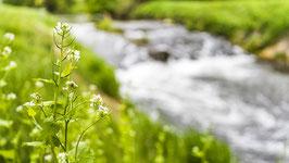 """Besitzurkunde über 4 Quadratmeter wertvolles Bienenschutzgebiet im geschützten Biosphärenreservat """"Hasental"""" für die Laufzeit von 12 Monaten. (Sofortiger Download nach Zahlungsbestätigung)"""