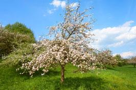"""Besitzurkunde über 5 qm wertvolles Bienenschutzgebiet im geschützten Biosphärenreservat """"Seidenbienenhang"""" für die Laufzeit von 12 Monaten. (Sofortiger Download nach Zahlungsbestätigung)"""
