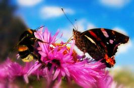 """Besitzurkunde über 2 Quadratmeter wertvolles Bienenschutzgebiet im geschützten Biosphärenreservat """"Hummelsknapp"""" für die Laufzeit von 12 Monaten. (Sofortiger Download nach Zahlungsbestätigung)"""