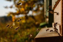 """Besitzurkunde über 10 Quadratmeter wertvolles Bienenschutzgebiet im geschützten Biosphärenreservat """"Honigbienenfeld"""" für die Laufzeit von 12 Monaten. (Sofortiger Download nach Zahlungsbestätigung)"""