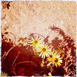 Blumen mit Schatten