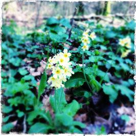 Waldblumen gelb