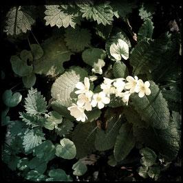 Waldblumen weiss