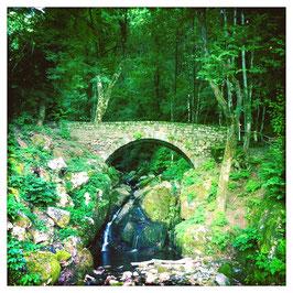 Bach im Wald, Gambarogno