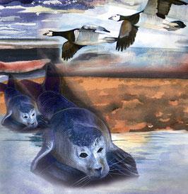Seehunde und Nonnengänse