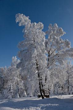 Schneebaum beim Gäbrisseeli