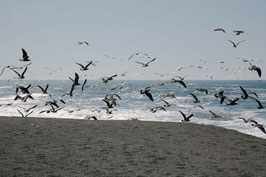 Vögel USA