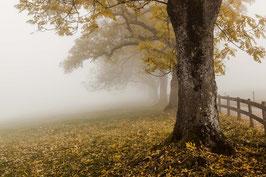 Herbstbäume 1