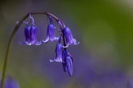 Blume 19