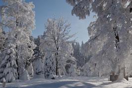 Schneebäume 5