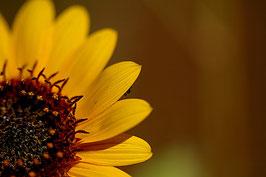 Blume 3 gelb