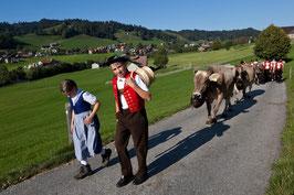 An der Viehschau 3