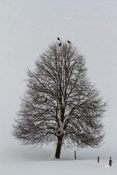 Winterbaum mit Raben 1