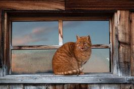 Katze rot 4