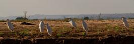 Vögel Madagaskar 1