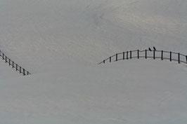 Zaun mit Vögeln 1