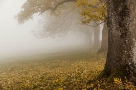 Herbstbäume 2