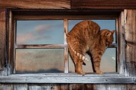 Katze rot 2