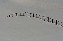 Zaun mit Vögeln 2