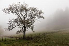 Herbstbaum 1