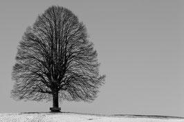 Baum mit Bank im Schnee