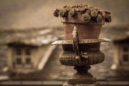 Blumentopf Korsika