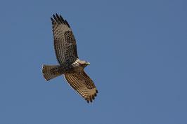 Adler USA