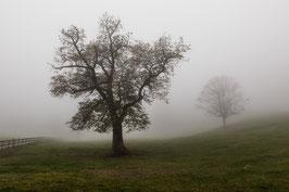 Herbstbaum 2