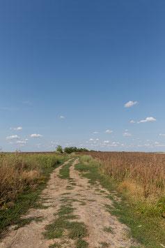 Feldweg Ungarn