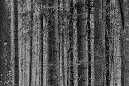 Im Bayerischen Wald 5, s/w