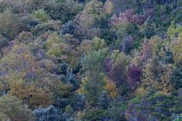 Herbstwald Korsika