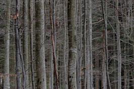 Im Bayerischen Wald 1