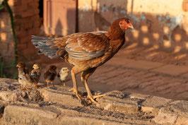 Huhn Madagaskar
