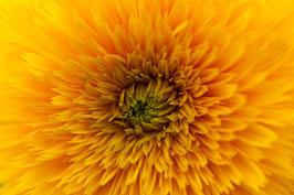 Blume 1 gelb