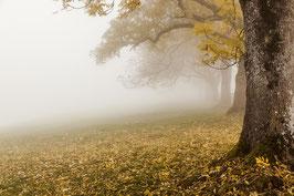 Herbstbäume 3