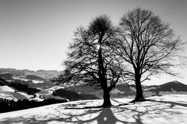 Bäume in Schlatt-Haslen
