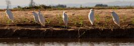 Vögel Madagaskar 2