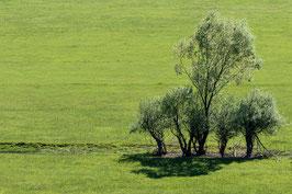 Baumgruppe Montenegro