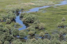 Sumpfgebiet Montenegro