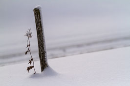 Pfosten und Pflanze im Schnee
