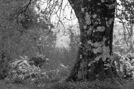 Baum 4
