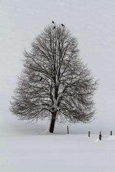 Winterbaum mit Raben 2