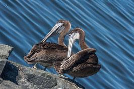 2 Pelikane