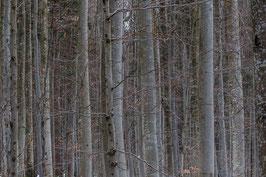 Im Bayerischen Wald 3