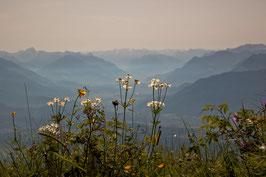 Blumen und Rheintal