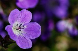 Blume 20